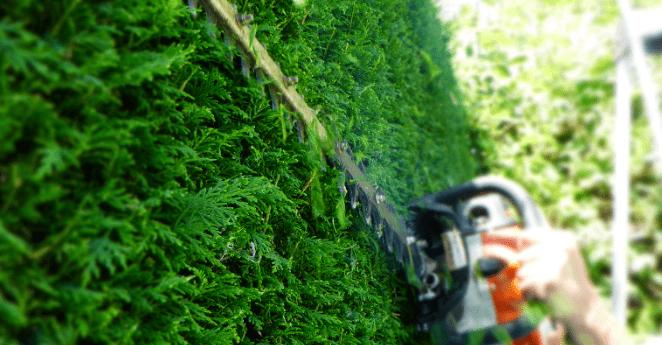 Tree Trimming – Coquitlam