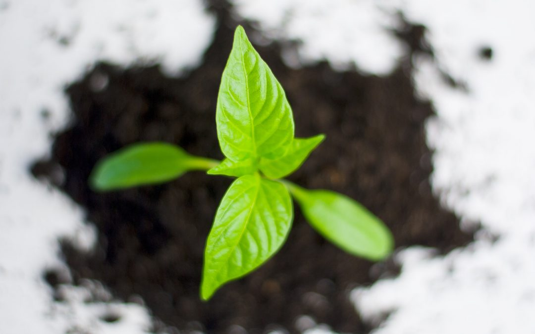 Tree Fertilization Services