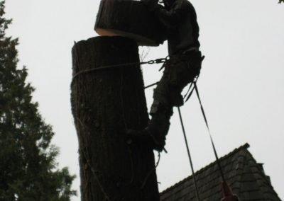 Best-Tree-Removal-Practice