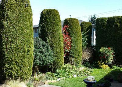 Beautiful-Hedge-Trimming