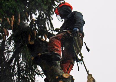 Tree-Service-Safety