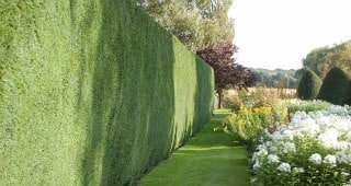 Hedges Trimming and Cutting