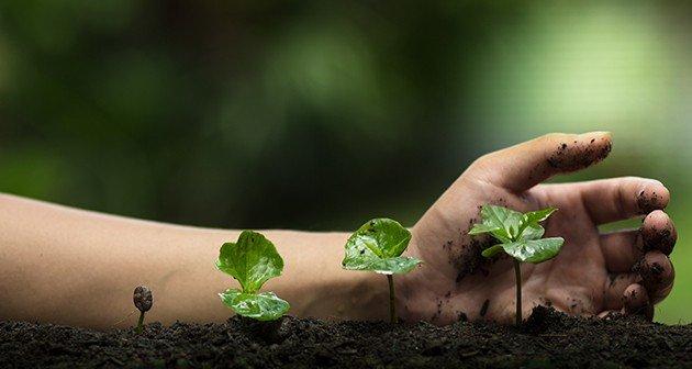 Mature Plant Health Care