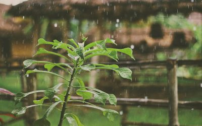 Storm Proofing Your Garden