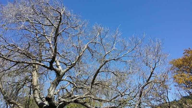Seasonal Tree Care
