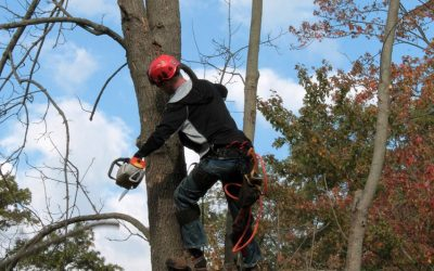 All You Need to Know When Hiring an Arborist