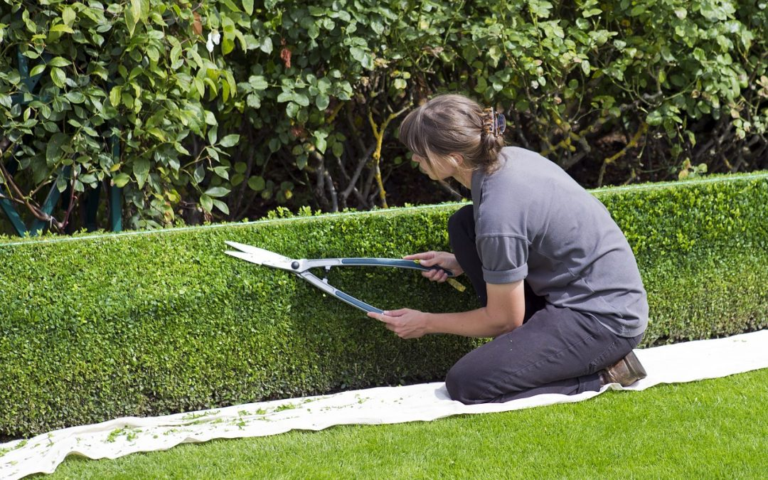 4 tips to trim the hedges properly