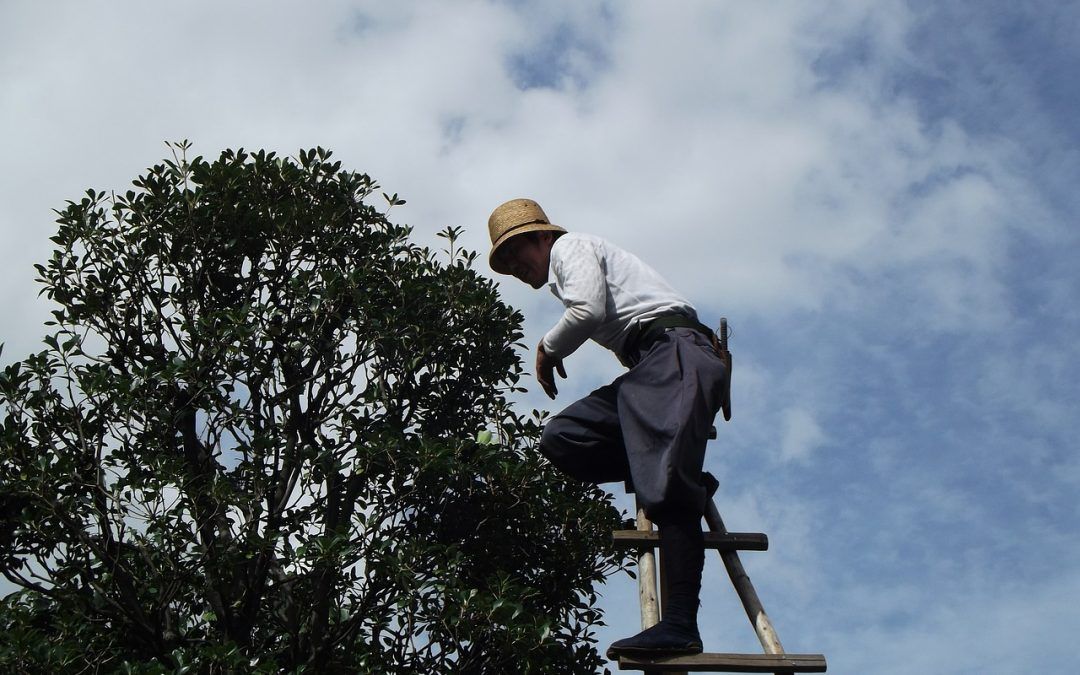 Everything You Need To Know About Tree Trimming and Pruning