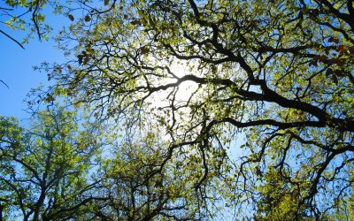 How to take care of trees in summers?