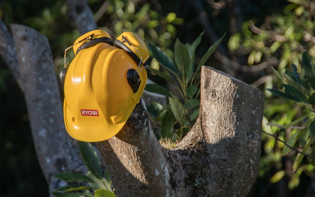 Why You Need To Hire Professional Tree Service Providers