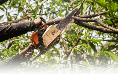 Risk Involved In Tree Cutting For Homeowners