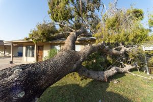 storm damage to a tree